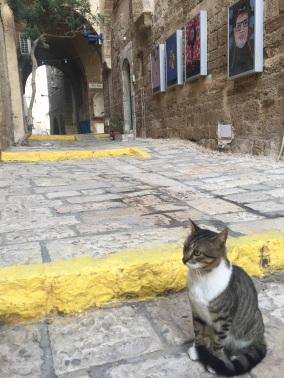 Pittoreske Jaffa