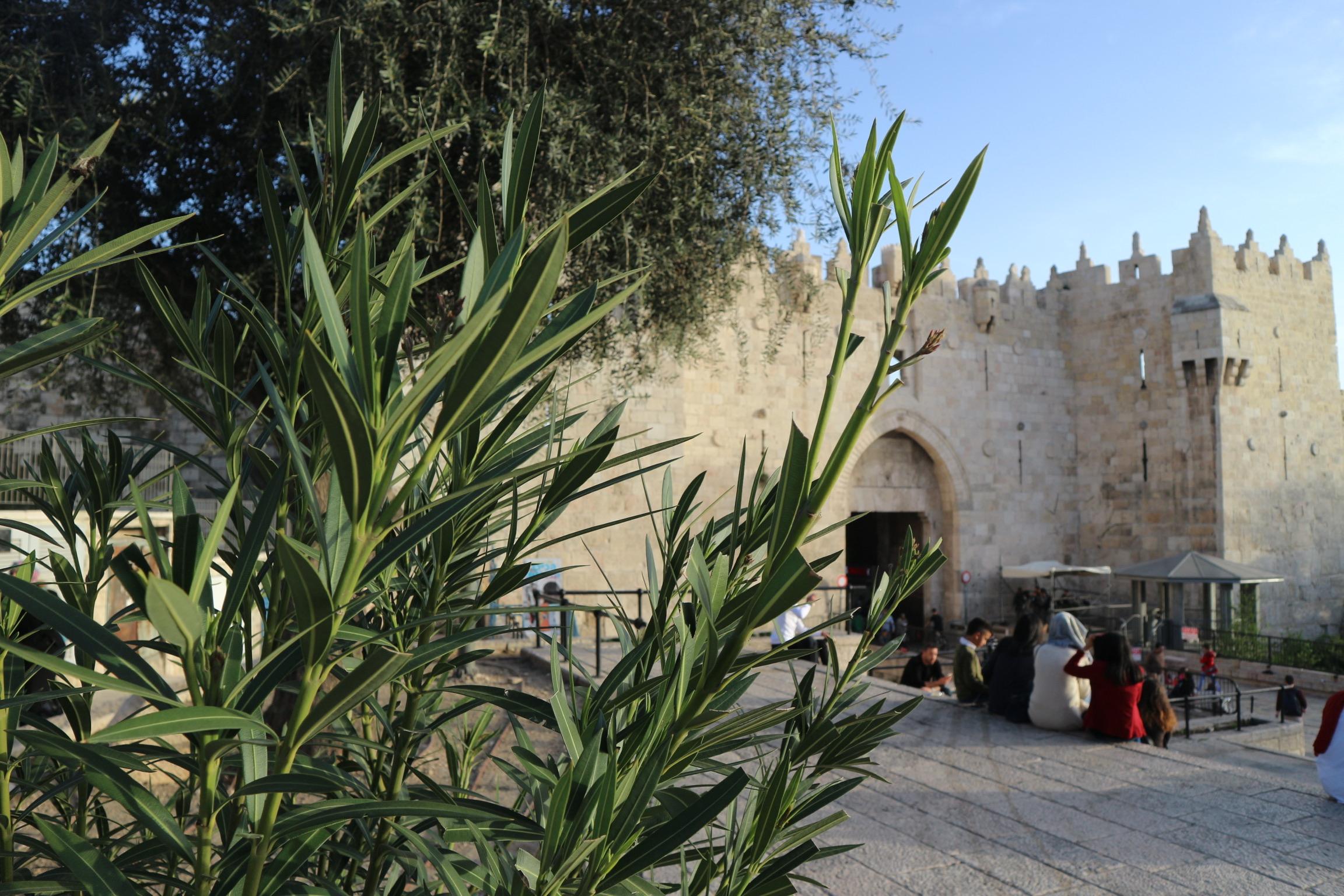 Damascus Gate Jeruzalem
