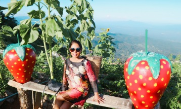 Strawberrie picking Mon Chaem (Mon Jam) Chiang Mai